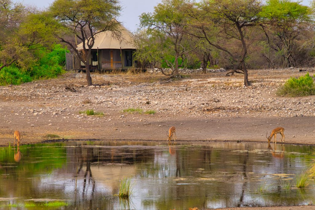 Self Drive Namibia Onguma Tented Camp Watering Hole
