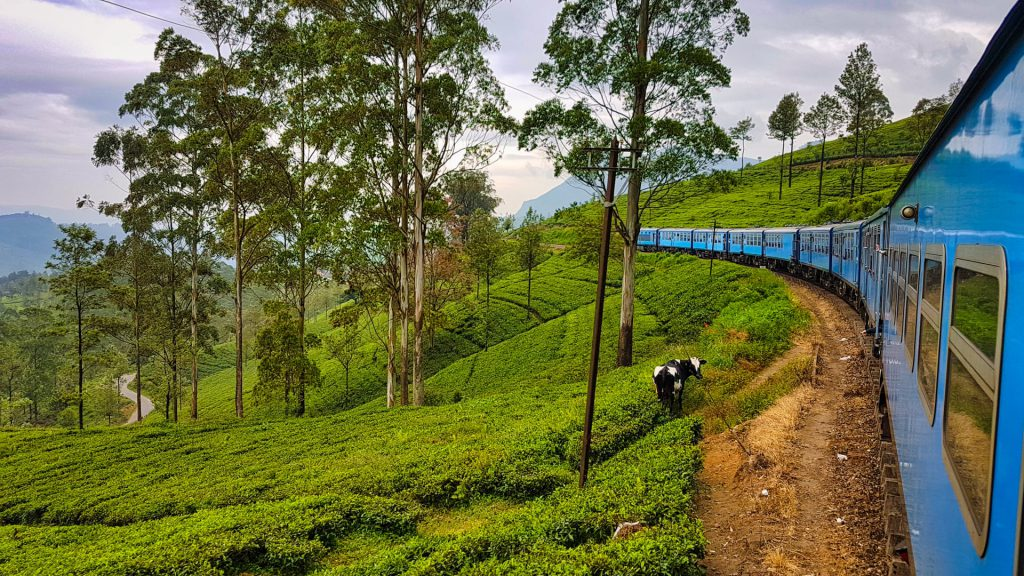 Kandy Ella Train Tea plantation view